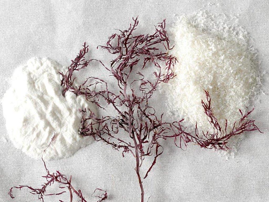 Чем отличается Агар-агар от желатина?